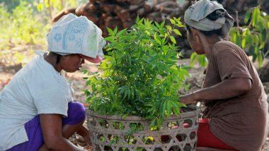 Prajurit Nabati: Tingkatkan Kualitas Kesehatan Masyarakat Dengan Pestisida Nabati